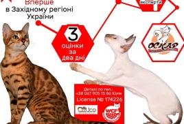 Приглашаем на международную выставку котов в г.Хмельницк (Украина)