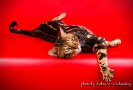 Наш кот Sasha на фотосессии